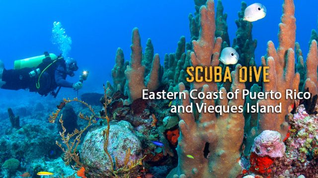 SCUBA DIVE TO VIEQUES ISLAND